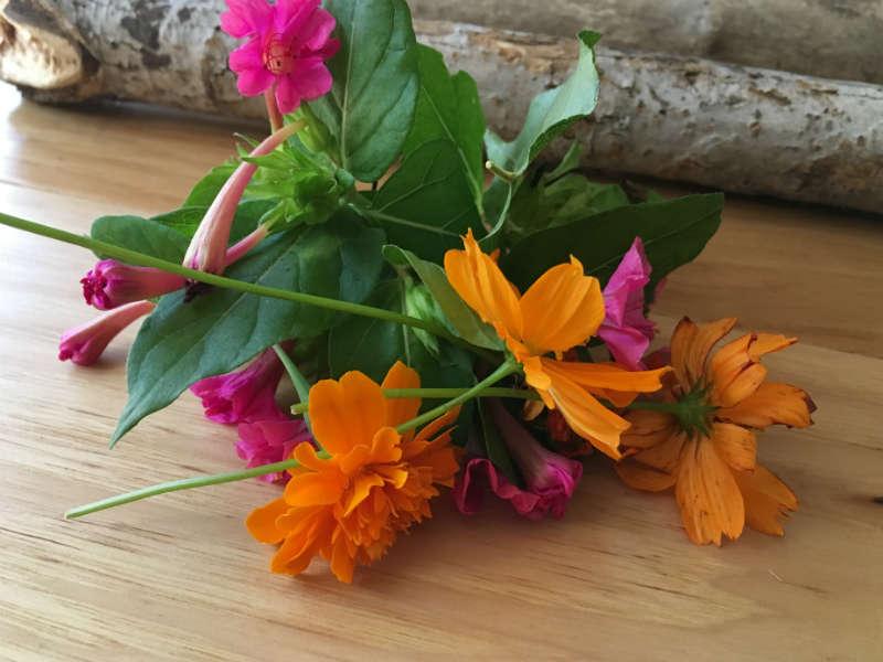Marigold Cosmos and Four O Clock flowers for eco printing