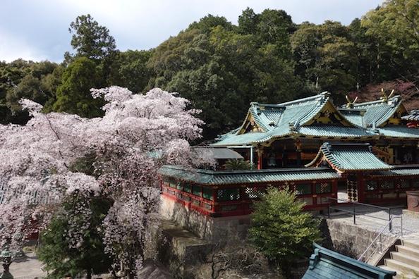 【Shizuoka Sakura Map 16】Japan National Treasure; Kunozan Toshogu Shrine