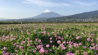 【Photogenic Spot】Protecting Borough of the township at the foot of Mt.Fuji