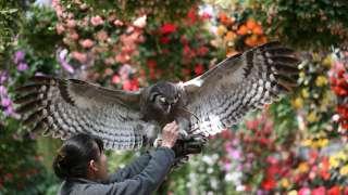 Fuji Kachoen Garden Park; An amusement park where you can feel the very beauty of flowers and bird.