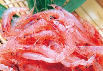 Flesh! Shizuoka Seafood