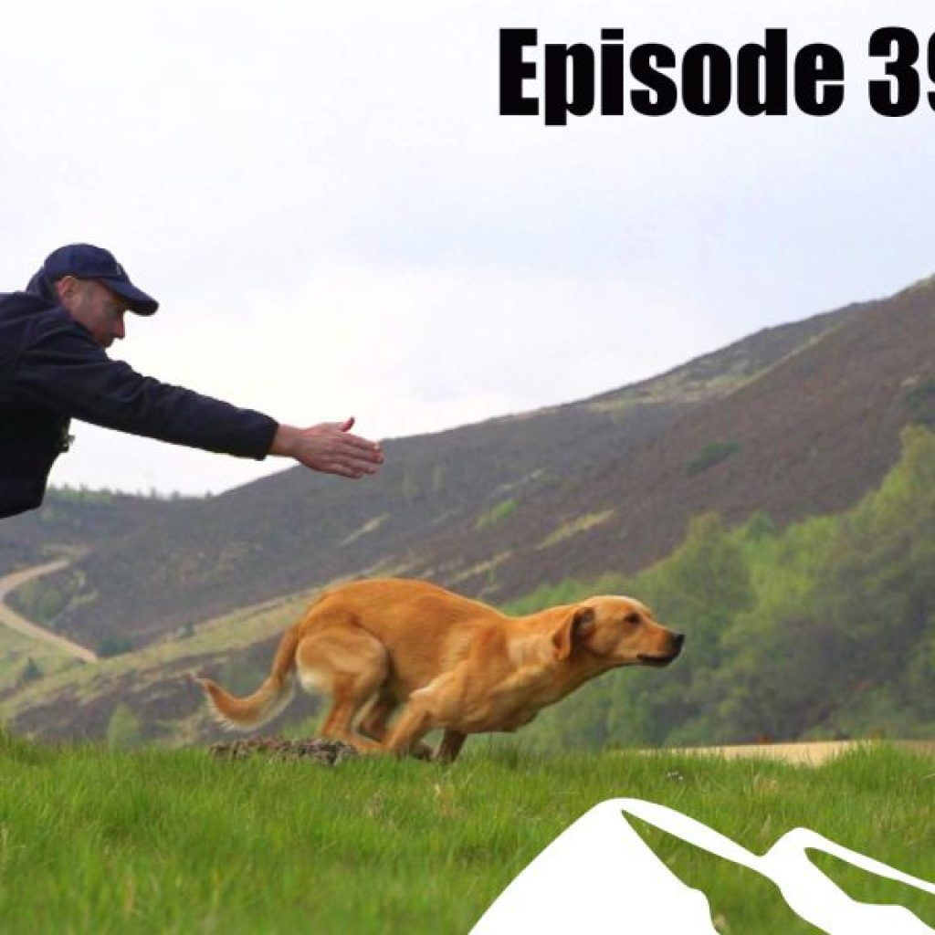 Fieldsports Britain – Top Dogs