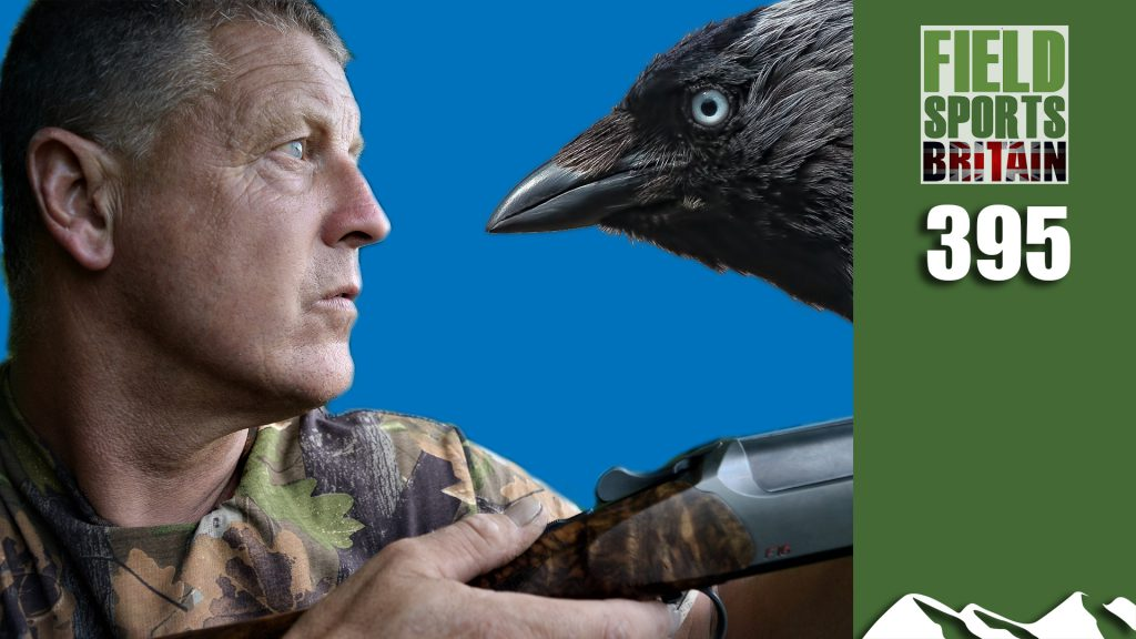 Fieldsports Britain – Crow vs Jackdaw