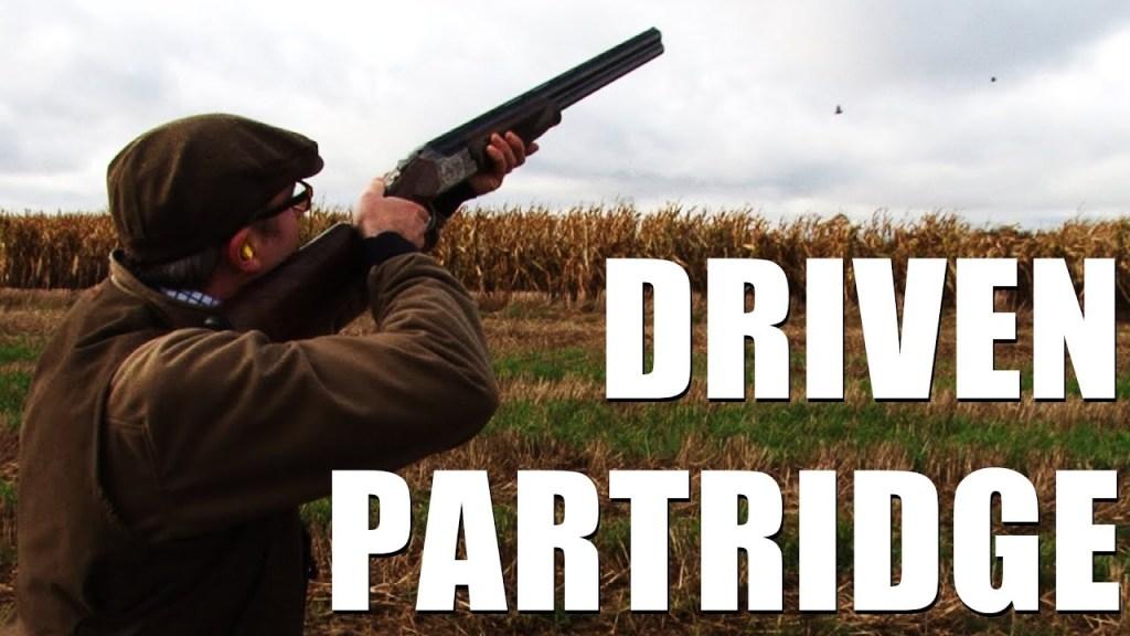 Driven partridge shooting outside Paris