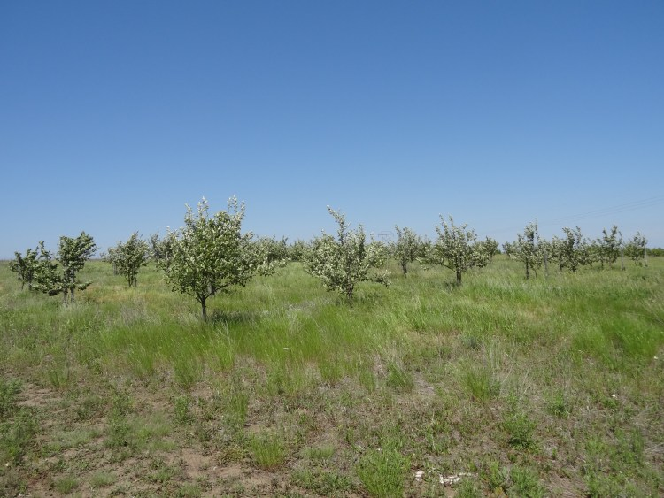 Fruit tree orchard at Standing Rock Indian Reservation