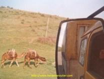 En turquie, rencontre avec des indigènes.