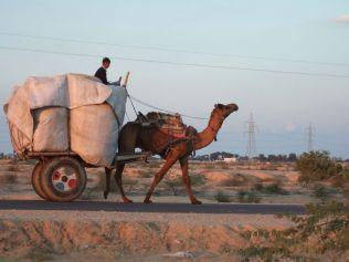 prermier moyen de transport pour debuter