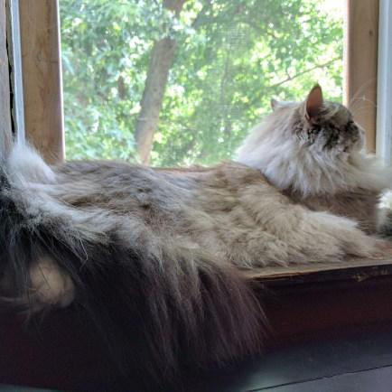 mew window