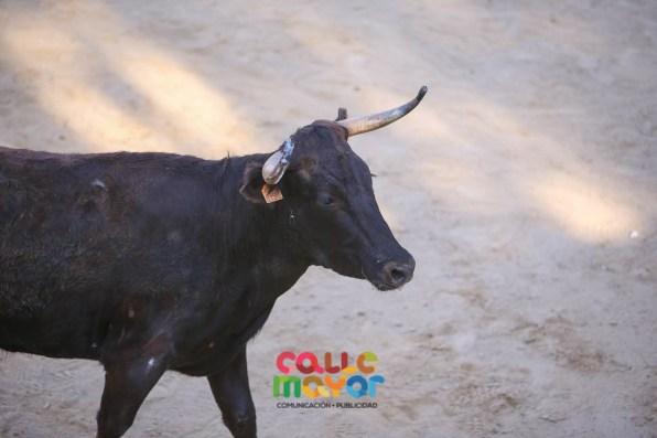 2019-08-03-FIESTAS-DE-ESTELLA-CALLE-MAYOR-COMUNICACION-Y-PUBLICIDAD (54)