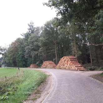 Het bos wordt uitgedunt op de Blankevoortsweg