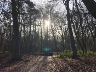 hardlooprondje in Het Staelduinse Bos — bij Het Staelduinse Bos.