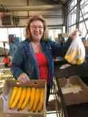 Het gele courgetteseizoen bij Courgettekwekerij van Vliet is bij deze geopend...