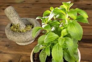 Έχετε φυτέψει στέβια; Δείτε πως να την χρησιμοποιήσετε