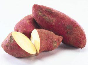 Γλυκοπατάτες: καλλιέργεια