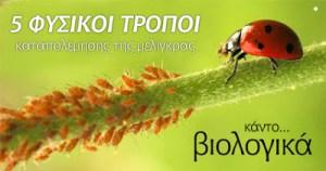 Read more about the article Μελίγκρα ή αφίδα. Πως να την καταπολεμήσετε φυσικά στο βιολογικό σας κήπο