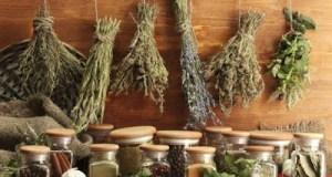 5 βότανα που μπορούν να εξαφανίσουν τις φλεγμονές και να μειώσουν τον πόνο