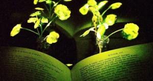 Επιστήμονες δημιούργησαν φυτά που λάμπουν και θα μπορούσαν να αντικαταστήσουν τις λάμπες!