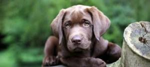 Πρώτες βοήθειες στον σκύλο