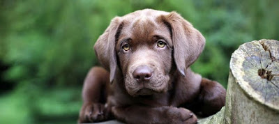 Read more about the article Πρώτες βοήθειες στον σκύλο