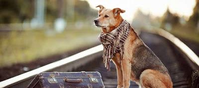 Read more about the article Σκύλοι εργαζόμενοι: Τι δουλειές κάνουν