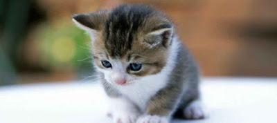 Γιατί η γάτα ακούει ακόμη και τον ψίθυρο