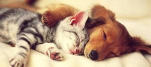 Όταν σκύλος και γάτα ερωτεύονται