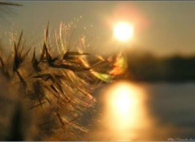 Read more about the article Πώς πολεμείται το πάθος της μνησικακίας;