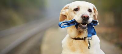 Γιατί ο σκύλος μου δεν έρχεται όταν τον φωνάζω;