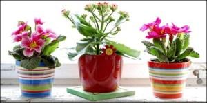 Καθαρίστε τον αέρα του σπιτιού σας με φυτά εσωτερικού χώρου