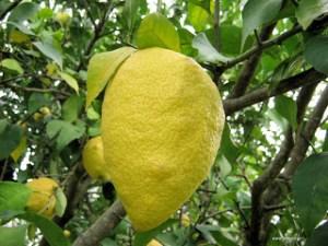 25 και πλέον έξυπνες χρήσεις του λεμονιού στο σπίτι