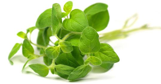 Read more about the article Το βιολογικό αρωματικό βότανο που έχεις στο ντουλάπι και προστατεύει από μικρόβια
