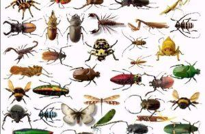 Αντιμετώπιση των εντόμων με φυσικούς τρόπους