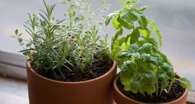 Read more about the article Οι 10 καλύτεροι τρόποι να κρατήσετε τα κουνούπια μακριά από εσάς, το σπίτι και τον κήπο σας