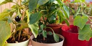 7 μυστικά για καλλιέργεια λαχανικών σε γλάστρα