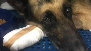 Read more about the article Φωτιά Αττική: Ιδιοκτήτης σκύλου δεν τον θέλει πίσω γιατί κάηκαν οι πατούσες του