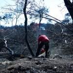 Στον εισαγγελέα 20 άτομα για τις φονικές πυρκαγιές στο Μάτι