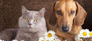 Read more about the article Το κάπνισμα βλάπτει την υγεία του σκύλου ή της γάτας μας;
