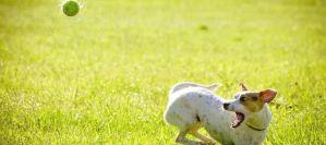 Πώς θα εκπαιδεύσω τον σκύλο μου να μην γαυγίζει διαρκώς;