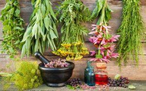 Χοληστερίνη: Ποια βότανα τη «ρίχνουν» άμεσα