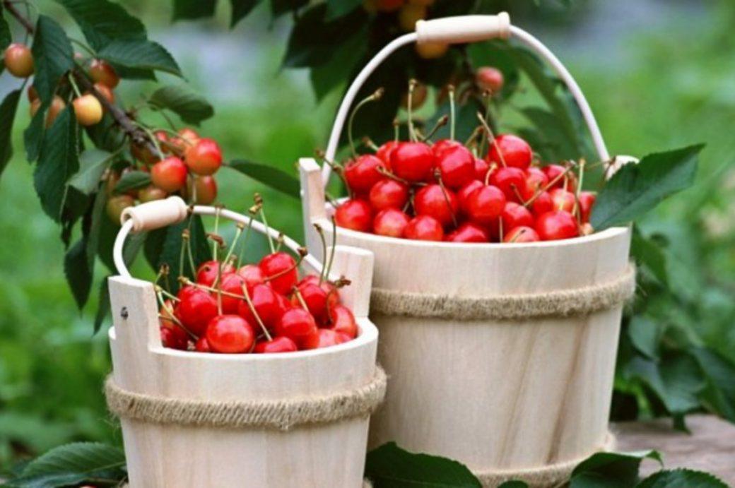 Read more about the article Τροφές έκπληξη που καταπολεμούν τον πόνο