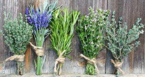 Τα βότανα τρέφουν το σώμα ώστε να μπορεί να θεραπευθεί μόνο του.