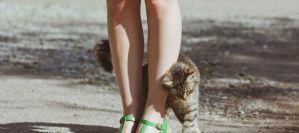 Γιατί η γάτα τρίβεται πάνω σας;