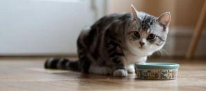 Με αυτό τον εκπληκτικό τρόπο θα καταλάβεις τη διάθεση της γάτας σου