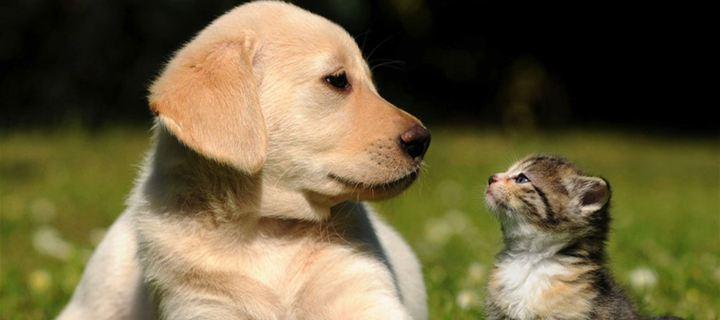 Λιγότερες αλλεργίες στα παιδιά που έχουν κατοικίδια ζώα!