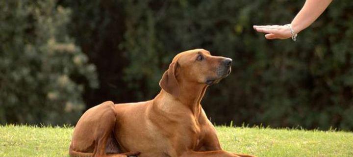 Συμβουλές για να βελτιώσουμε τη σχέση με το σκύλο μας