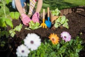 Read more about the article 7 τρόποι να χρησιμοποιήσετε το ξύδι στον κήπο σας
