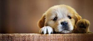 Τι μπορεί να κρύβει η κακοποίηση ζώων