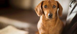 Read more about the article Αυτές είναι οι επικίνδυνες τροφές για τους σκύλους σας!