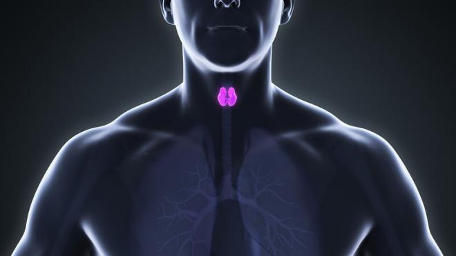 Read more about the article Θυρεοειδής: Πότε επιβαρύνει τη λειτουργία της καρδιάς