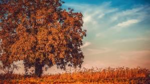 Φθινόπωρο: Ξεκινά και επίσημα σήμερα – Τι ώρα είναι η φθινοπωρινή ισημερία